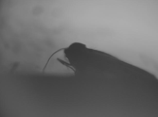 new-moth